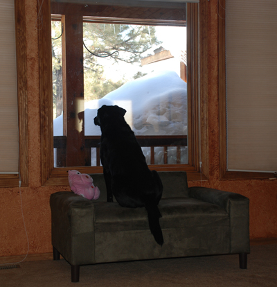 dog window seat