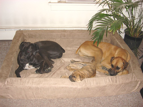 3 is not a crowd on my Big Dog Bed!