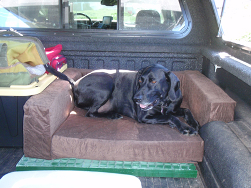 Willie can be comfy in the truck now too!
