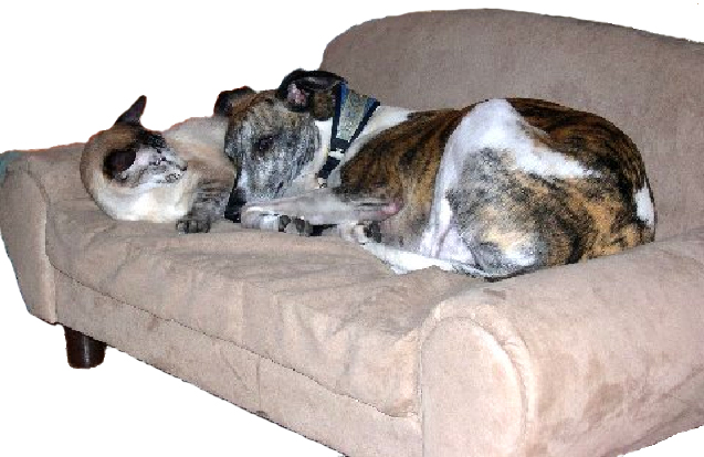 dog couch leopard