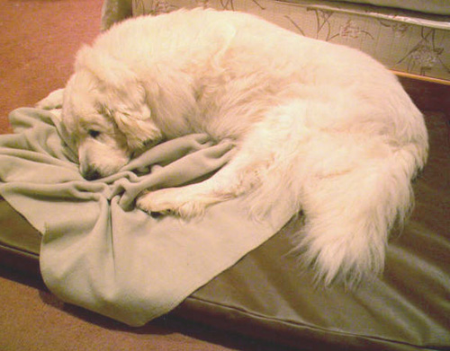 LeBlanc Memory Foam Dog Bed