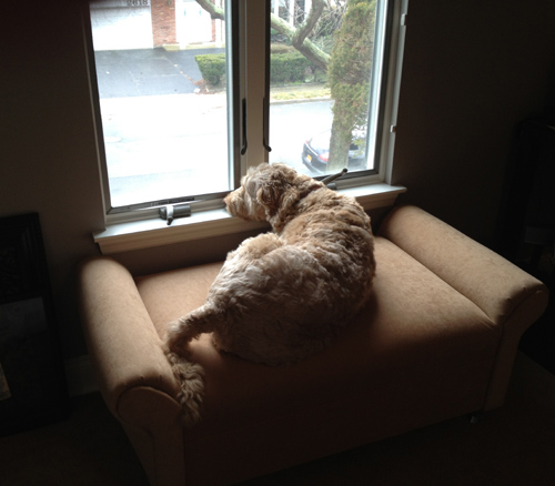 traceys dog on custom isadora day bed